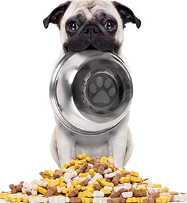 The Grocer Report: Focus on Pet Foodimage